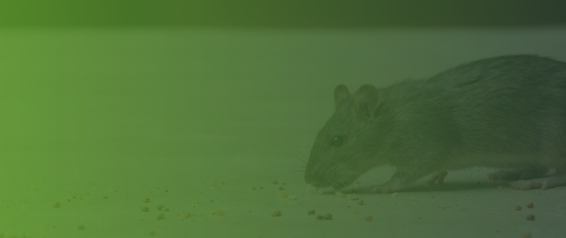 Green Rodent Restoration - Rodent & Attic Cleaning Company reviews | Insulation Installation at 9820 Owensmouth Ave - Chatsworth CA