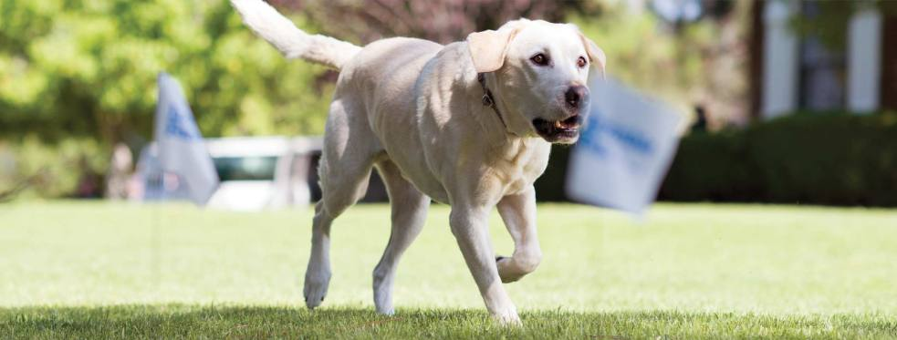 Invisible Fence of Tri-County reviews | Pet Services at 53115 Grand River Ave - New Hudson MI