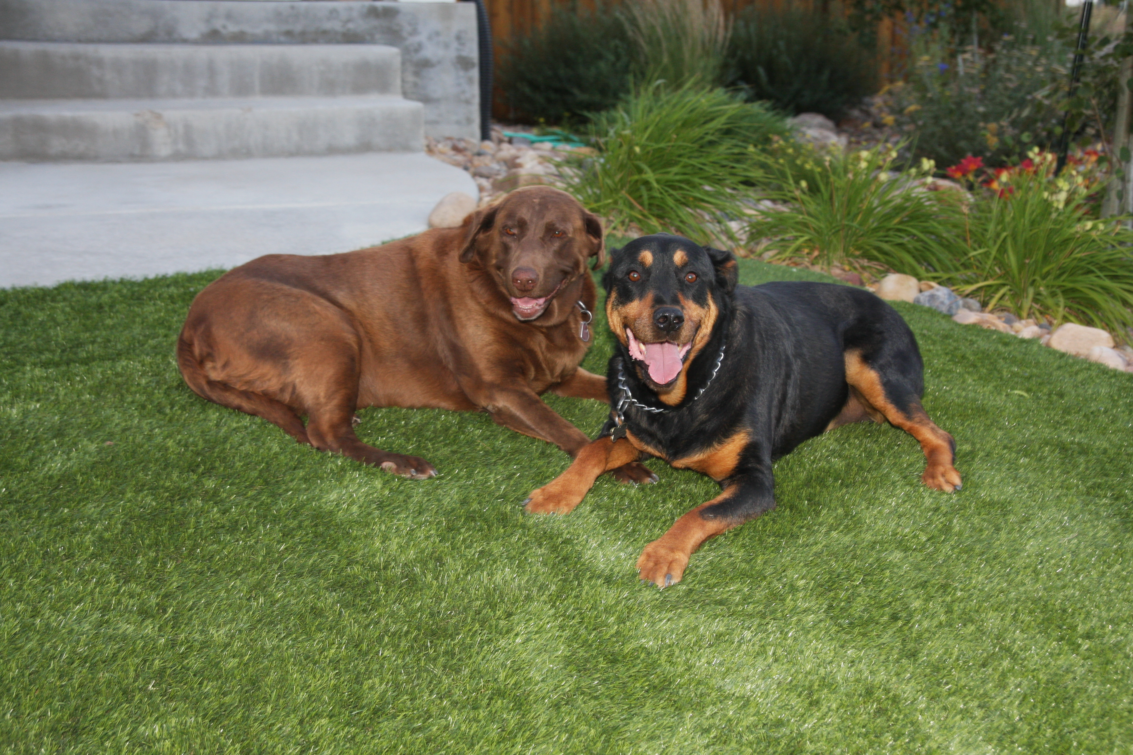 Mile High Synthetic Turf - Artificial Turf & Putting Green Installers reviews | Artificial Turf at 6435 Co Rd 6 - Brighton CO