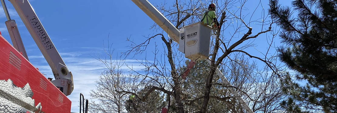 Taddiken Tree Company reviews | Tree Services at 1726 63rd St - Boulder CO